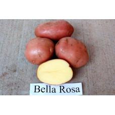 Картофель Беллароза. Сетка  2кг