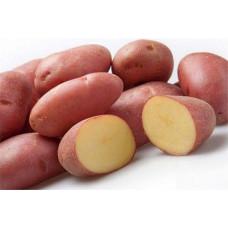 Картофель Ред Скарлет. Сетка 2 кг