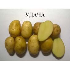 Картофель Удача. Сетка 2 кг