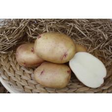 Картофель Жуковский ранний. Сетка  2кг